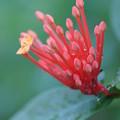 写真: 温室の花