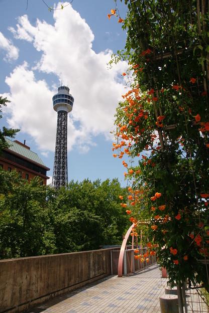 花とマリンタワー