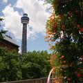 写真: 花とマリンタワー