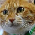 Photos: 愛猫