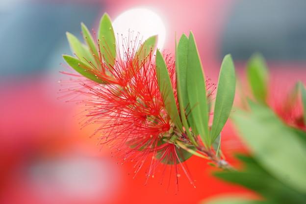 赤いブラシ