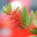 写真: 赤いブラシ