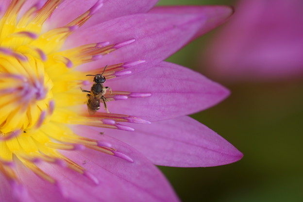 睡蓮と昆虫