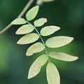写真: 雨の日の葉っぱ