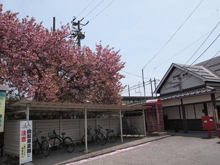 磐梯町の桜02