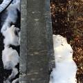 写真: 残雪の間ワンツーツーをゆく ~between the snow and snow