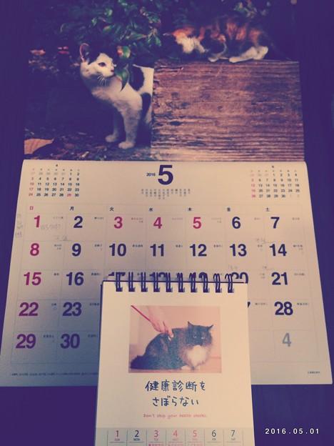 Photos: いつのまにか5月スタート ~Mayちゃん