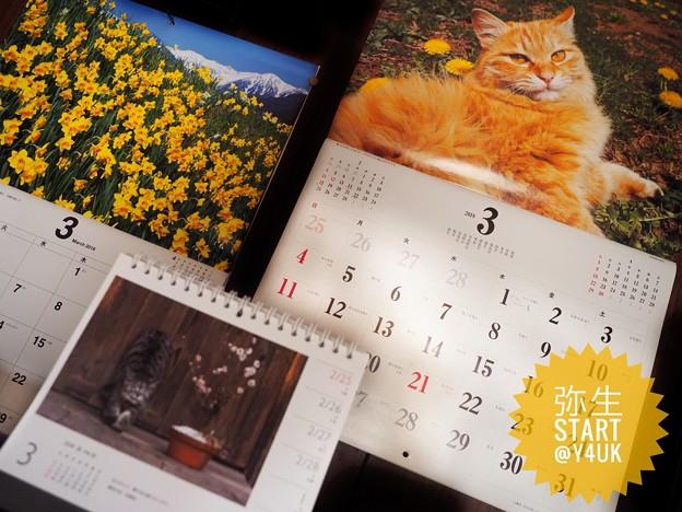 弥生ちゃんSTART~もぅお誕生月が終わってしまった短い2月(´・ω・`)1人祝った買った撮った。後半はカー娘の笑顔号泣明るさ素朴元気を貰ったそだねー(12-40mmF2.8PRO 絞り優先)