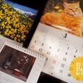 写真: 弥生ちゃんSTART~もぅお誕生月が終わってしまった短い2月(´・ω・`)1人祝った買った撮った。後半はカー娘の笑顔号泣明るさ素朴元気を貰ったそだねー(12-40mmF2.8PRO 絞り優先)