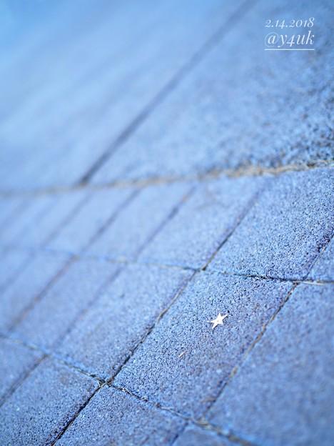 """Like a Star"" is on the foot, of Valentine's OM-D day ~小さな幸せ☆見つけたけど人じゃない…(E-M10 II, 25mmF1.8, 絞り優先)"