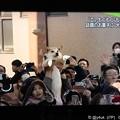 写真: そのワンちゃん!我が子のように持ち上げてくれ、カー娘に見られてモテモテ(〃ω〃)ワンちゃんになりたい!( T_T)\(^-^ )猫になるんでしょ!(°▽°)そだねー!