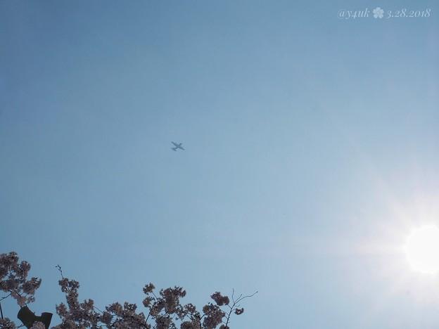 春霞の空に飛行機ブーン~桜満開撮ってたら飛んでキター!~Airplane in the spring sky [OM-D E-M10II, 12-40mmF2.8PRO] 40mm(80mm)