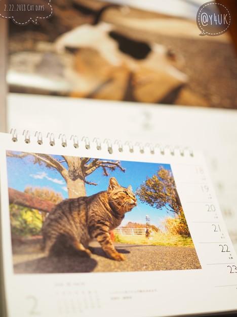 Photos: 2.22猫の日~優しく自然ににゃんこ撮る岩合光昭さんと同じOLYMPUS「m3/4でも十分対応できる。画質のクォリティー的にも大丈夫です」[OMD E-M10MarkII 25mmF1.8]