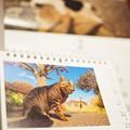 写真: 2.22猫の日~優しく自然ににゃんこ撮る岩合光昭さんと同じOLYMPUS「m3/4でも十分対応できる。画質のクォリティー的にも大丈夫です」[OMD E-M10MarkII 25mmF1.8]