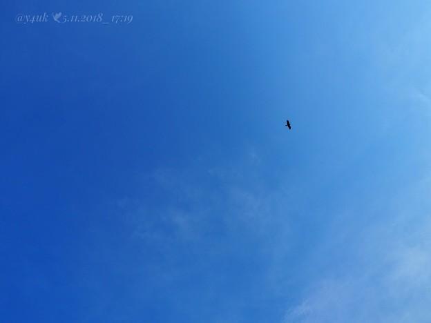 写真: 5月の別れ「残された青空が夢をひとつだけあなたに叶えてくれる」大空に鳥17:19 叶うなら飛んでゆきたいあなたに会いたい笑いたい~sky[E-M10MarkII, 12-40mmF2.8PRO]F9
