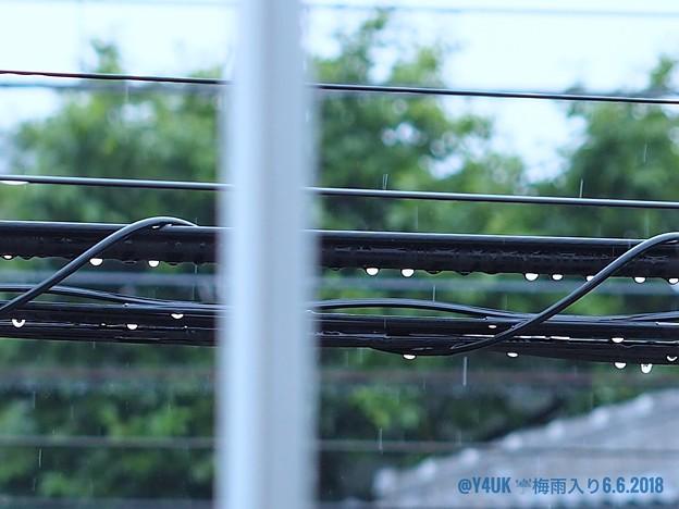 6.6梅雨入り~寒い雨。濡れる電線に丸い雫が仲良く丸ボケ新緑と共に雨音を奏でています [OM-D E-M10MarkII, 12-40mmF2.8PRO, MF]マニュアルフォーカス,絞り優先