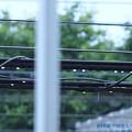 写真: 6.6梅雨入り~寒い雨。濡れる電線に丸い雫が仲良く丸ボケ新緑と共に雨音を奏でています [OM-D E-M10MarkII, 12-40mmF2.8PRO, MF]マニュアルフォーカス,絞り優先