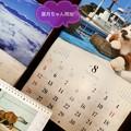 葉月ちゃん開始~8月1日。7月が8月並み異常気象だったから8月はもぅ9月でよい~わ岩合光昭カレンダーにゃんこも避暑に命がけ~気象庁も7月異常気象と認める(絞り優先+1露出)