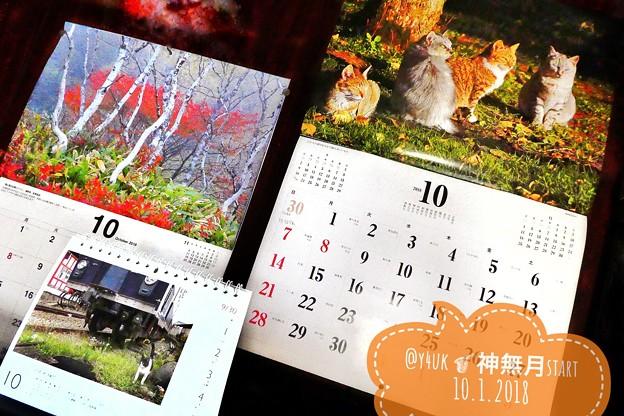 Photos: もぅ神無月にかこまれて~10月start近づくXmas~岩合光昭にゃんこカレンダーにかこまれて~もぅ来年カレンダー発売する1年の早さ~iPhone7Plus2年ケアも終わる