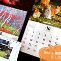 写真: もぅ神無月にかこまれて~10月start近づくXmas~岩合光昭にゃんこカレンダーにかこまれて~もぅ来年カレンダー発売する1年の早さ~iPhone7Plus2年ケアも終わる