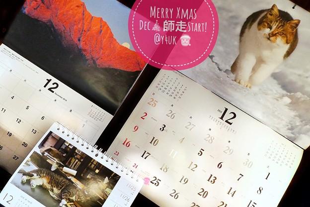 Merry Xmas December Start!もぅ師走?12月なんて嘘。だって木枯らし1号なかったもん10月ぽい異常気象だもの~岩合光昭にゃんこカレンダー生きる、人の通る雪道を歩き本を枕。信州山
