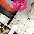 Photos: Merry Xmas December Start!もぅ師走?12月なんて嘘。だって木枯らし1号なかったもん10月ぽい異常気象だもの~岩合光昭にゃんこカレンダー生きる、人の通る雪道を歩き本を枕。信州山
