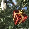 Xmas Present Tree~クリスマスツリー☆赤い箱が温かい( ´ ▽ ` )12.3#ワンツースリーの日に行った通院旅先で今年はずめて付け足したプレゼントオーナメント見ただ!サンタさんからだ