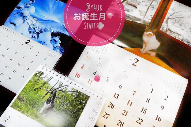 """お誕生月""""2月""""Start!もう1月じゃない早い年月~岩合光昭にゃんこカレンダー可愛い「雪を観察してから」「尻尾を木に」ねこ。信州の雪風景も絶景!~めくる毎月恒例cute cats!お誕生日あと3日…"""