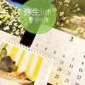 """いやよ弥生3月Startだなんて嘘よ…岩合光昭にゃんこx2も信州養命酒カレンダーも同じ""""水仙""""写真の奇跡!~28日間短いお誕生2月もぅ終了(TT)#猫の日#ヴァレンタイン#好きな有名人お誕生日も2月!"""