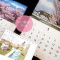 Photos: もぅ4月スタート春桜~岩合光昭カレンダーにゃんこ屋根を背筋一直線で可愛い桜越し~南アルプス山脈と桜満開~ミツバチハウスの上でネコ佇む~春ピンク桜いっぱい、ねこ写真、小さな幸せ~平成最後の4月の桜の猫山