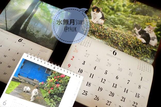 """もぅ半年すぎる最後の月の6月スタート""""水無月の夜""""に岩合光昭にゃんこ沖縄シンガポール子猫たち&信州森の神秘光芒カレンダー~毎月恒例めくり梅雨が暑さがやってくる恐怖を写真達が癒してくれ今月もよろしくです"""