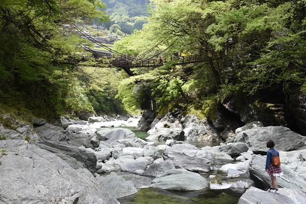 Photos: かずら橋を望む