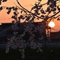 写真: 夕景