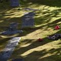 写真: 苔むす庭