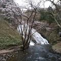 写真: 湯滝と桜