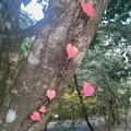 可愛い紅葉
