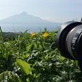 Photos: 花の島
