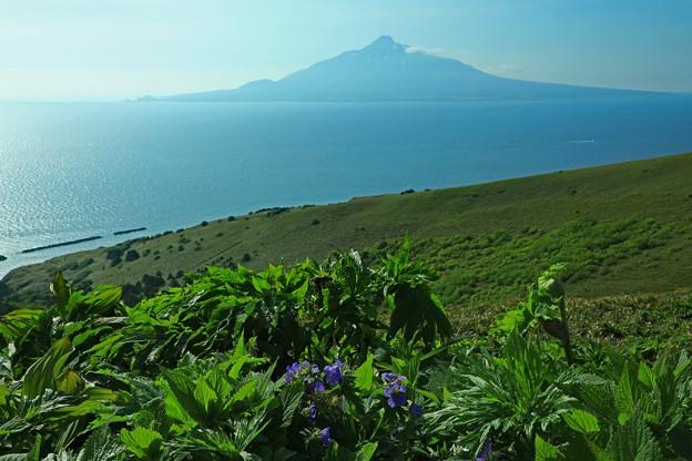 花の島からの利尻富士
