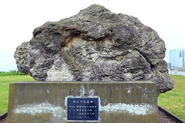 ホタテ化石群モニュメント