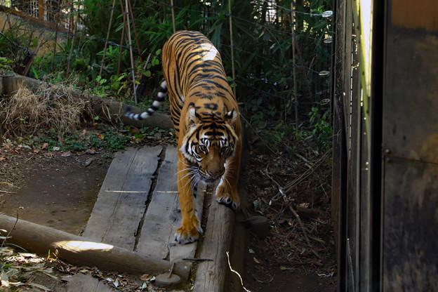 初めての上野動物園_1
