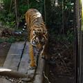 Photos: 初めての上野動物園_1