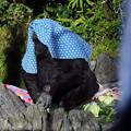 Photos: 初めての上野動物園_2