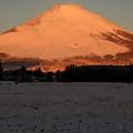 Photos: 雪景色に映える