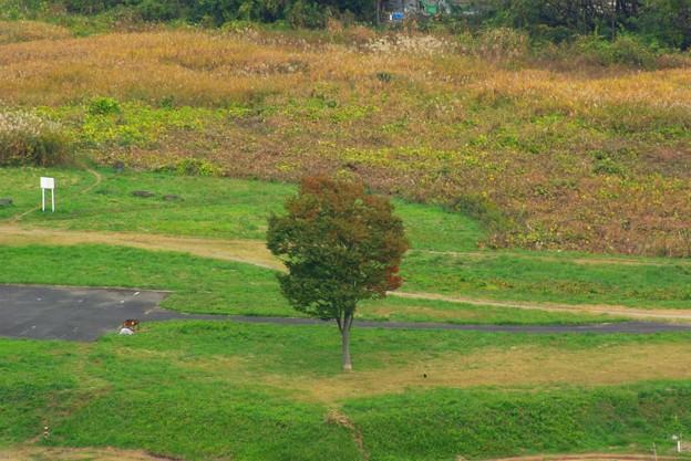 滝山城からの遠景_2