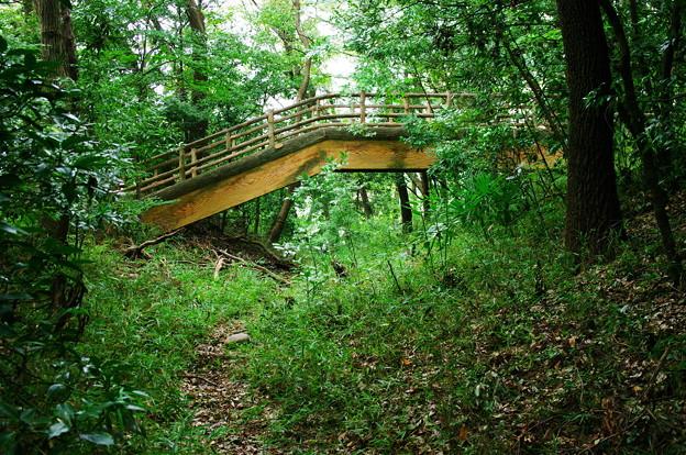 岡城_木橋と堀