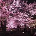 東京近郊の写真好き