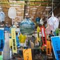 Photos: 色々な風鈴