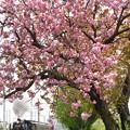 桜花から新緑へ 8カット