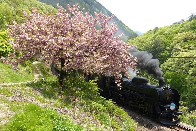 八重桜 5カット