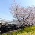 桜花の沿線 8カット